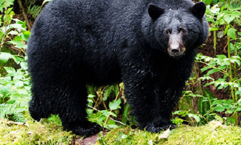 Be Bear Aware!
